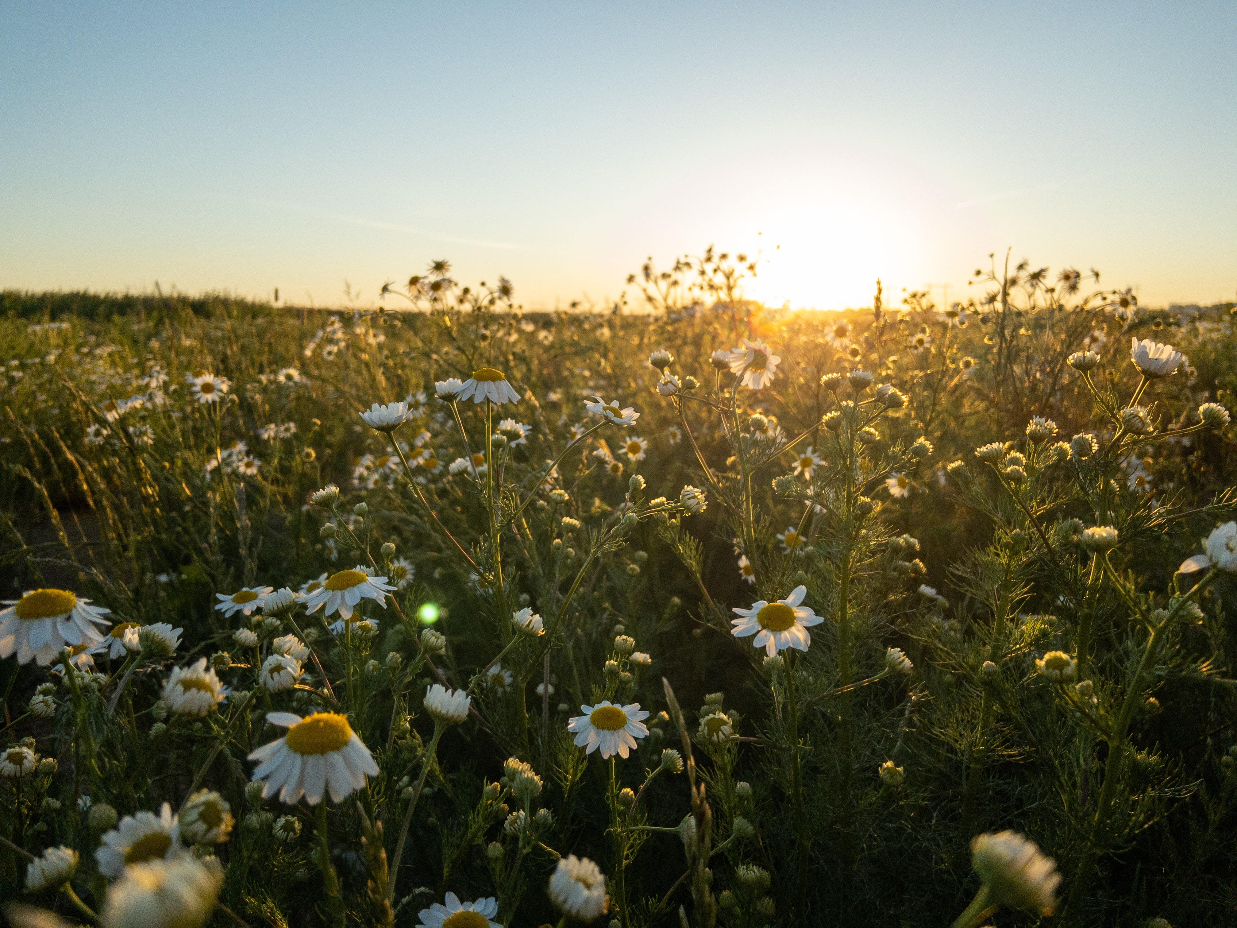 Dancing in a Field of Daisies: Resting in the Lord
